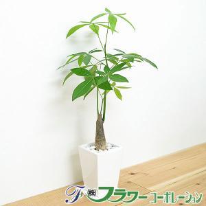観葉植物 パキラ スクエア陶器鉢植え 3...
