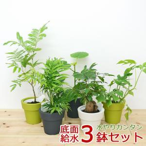 観葉植物 ウンベラータ エバーフレッシュ ガジュマル 底面給水 3鉢セット 5種類 おしゃれ お祝い