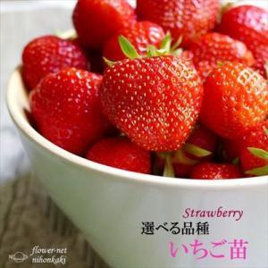 予約販売10月上旬以降発送 選べるいちご苗 9cmポット イチゴ 苺|flower-net