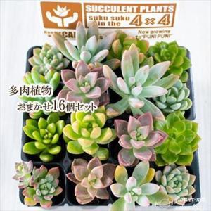 土になるからそのまま使える天然素材ポットなのでリースや寄せ植えづくりにピッタリなアイテム、多肉植物お...