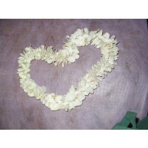 デンファレのフラワーレイ 生花のフラワーレイ