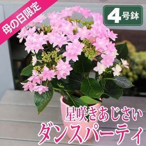 母の日 2019 花 あじさい ダンスパーティー 4号鉢 母の日花 鉢花 送料無料|flower