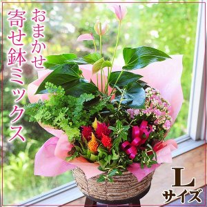 誕生日の花 鉢植え 花 ギフト おまかせ寄せ鉢ミックス Lサイズ お祝い 花 おしゃれ 寄せ植えギフト 翌日配達|flower