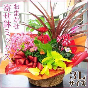 誕生日の花 鉢植え 花 ギフト 可愛い寄せ鉢ミックス3L お...