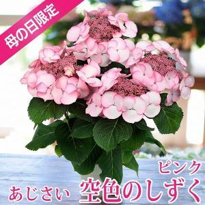 母の日 2019 あじさい【空色のしずく】 ピンク 5号鉢 母の日ギフト 紫陽花 送料無料|flower