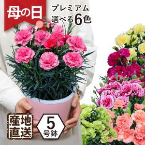 母の日ギフト2019 カーネーション鉢 プレミアム6色 5号鉢 産地直送 花 プレゼント 鉢植え 送料無料|flower