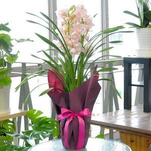シンビジュームギフト 愛子さま3本たち 鉢花  お歳暮シンビジューム クリスマス|flower