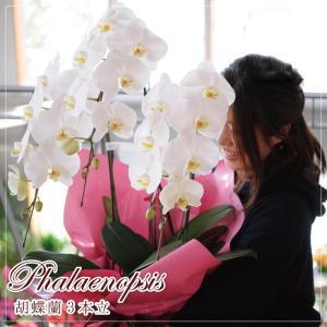 開店祝い胡蝶蘭 3本立 白 洋ラン 鉢植え 花 ギフト 移転祝い 開院祝い|flower