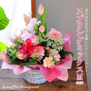 ホワイトデー花ギフト スプリングミックス Mサイズ チューリップアレンジメント誕生日の花 ホワイトデー花|flower