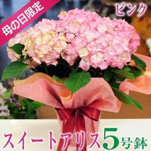 母の日 2019 ギフト アジサイ 紫陽花 あじさい スイートアリス ピンク 5号鉢 花 鉢花 送料無料|flower