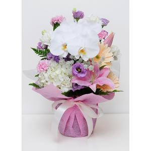 花 お供え用 胡蝶蘭の洋風アレンジメント アレンジメント|flower