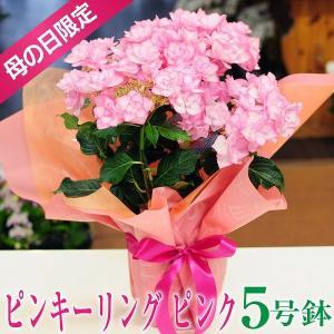 母の日2019 あじさい ピンキーリング ピンク 5号鉢 鉢植え 送料無料|flower