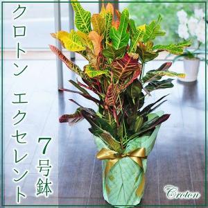 クロトン エクセレント 7号鉢 観葉植物 開店祝い 移転祝い 新築祝い おしゃれ インテリア 室内
