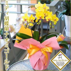 花 ギフト 胡蝶蘭 プレゼント ミディ胡蝶蘭 ナオミゴールド 3本立ち 希少品種 花持ちが良い|flower