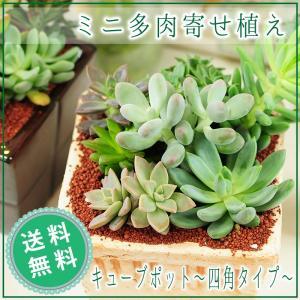 ミニ多肉寄せ植え アソート キューブポット 四角タイプ  ギフト  プレゼント  花ギフト flower