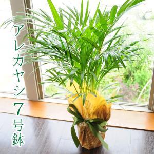 テーブルヤシ 7号鉢 アレカヤシ 観葉植物 開店祝い 移転祝い 新築祝い|flower
