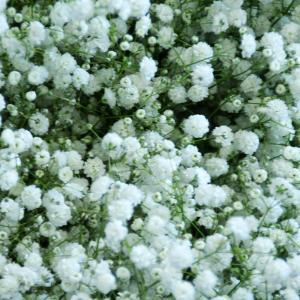 花束に追加するカスミ草|flower