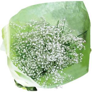 誕生日の花 プレゼント 花 花束/ブーケ/カスミ(霞・かすみ)草の花束/フラワーギフト|flower