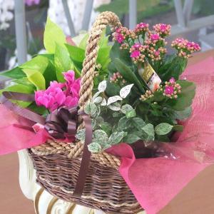 誕生日の花 鉢植え 花 ギフト 寄せ鉢 ギフト プリティーミックス 翌日配達|flower