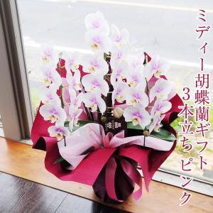 ミディー胡蝶蘭3本立ち ピンクお祝いギフトに最適な胡蝶蘭|flower