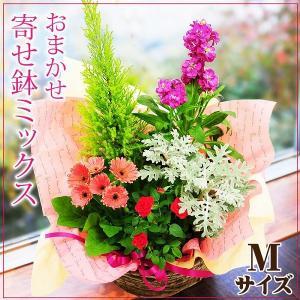 鉢植え 花 ギフト おまかせ寄せ鉢ミックス ギフト 翌日配送|flower
