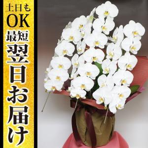 胡蝶蘭 3本立 白 3Lサイズ 洋ラン 鉢 花 ギフト