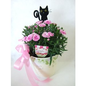 母の日のクロネコカーネーション|flowerelegance