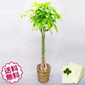 観葉植物 ギフト パキラ おしゃれ 大型 10号(籐かご 皿付)(エリア限定) お祝い 開店 開院 ...