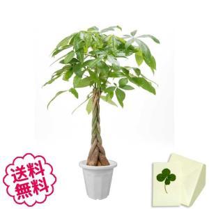 観葉植物 パキラ おしゃれ 大型 10号 (鉢カバーなし 鉢皿なし ギフト不向き)|flowergift-meme