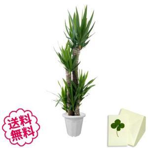 観葉植物 ユッカ おしゃれ 大型 10号 (鉢カバーなし 鉢皿なし ギフト不向き)|flowergift-meme