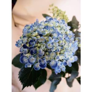 【母の日】アジサイ ハイドランジア ディープパープル flowerliberte