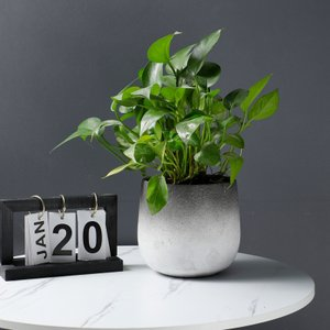 花器 花瓶 フラワーベース 四角 ストライプ 花 陶器   ギフト サイズー17cm*16cm*16H  穴あり,ガーデニング,園芸,鉢|flowernana