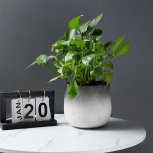 花器 花瓶 フラワーベース 四角 ストライプ 花 陶器   ギフト サイズー19cm*17cm*18H  穴あり,ガーデニング,園芸,鉢|flowernana