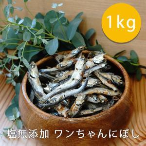 犬用無添加おやつ 塩無添加 ワンちゃんにぼし(煮干し) お徳用 1kg 食塩不使用 サカモト