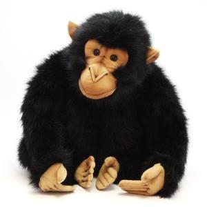 HANSA CHIMPANZEE (ハンサ チンパンジー)|flyers