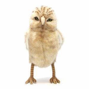 HANSA OWL BURROWING (ハンサ アナフクロウ)|flyers