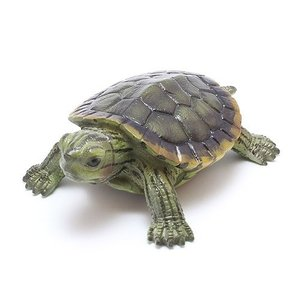 REPILES MAG RED EARED SLIDER  (レプティル マグ ミシシッピアカガメ)|flyers