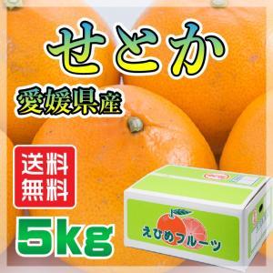 愛媛 県産 せとか セトカ 送料無料 TV話題 みかん 柑橘 特価 5kg<訳有り>|fmarushe535