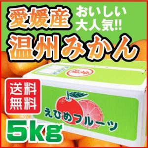 南柑20号 温州 みかん 5kg 愛媛県産 送料無料 規格外 訳あり 安い 自宅用の画像