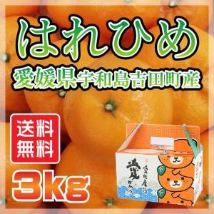 はれひめ 愛媛県 宇和島市 吉田町産  サイズ無選別 送料無料 3kg|fmarushe535