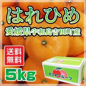 はれひめ 愛媛県 宇和島市 吉田町産  サイズ無選別 送料無料 5kg|fmarushe535