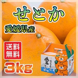 愛媛 県産 せとか セトカ 送料無料 TV話題 みかん 柑橘 特価 3kg<訳有り>|fmarushe535