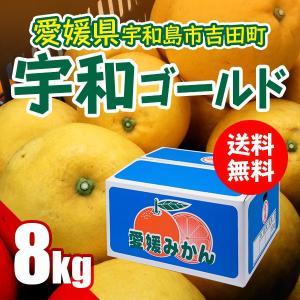 宇和ゴールド 8kg(別名 河内晩柑・みしょう柑)果汁たっぷり 愛媛県 宇和島市 吉田町産  送料無料 特価 訳あり (M2)|fmarushe535