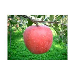 平塚りんご園 完熟りんご100%ジュース(200ml×5本入)|fmkitakata|04
