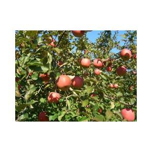 平塚りんご園 完熟りんご100%ジュース(200ml×5本入)|fmkitakata|05