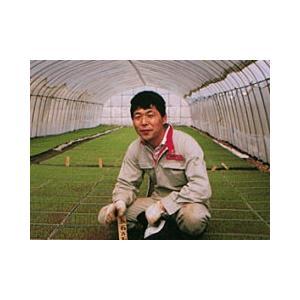 風間農園 会津喜多方米特別栽培米コシヒカリ5kg|fmkitakata|02