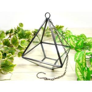 テラリウム ステラ ガラスショーケース コレクションボックス 小物入れ ガラス製 収納ケース ディスプレイ インテリア小物 植物鑑賞|fnetscom