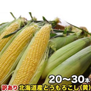 とうもろこし トウモロコシ 北海道産 訳ありゴールドラッシュ10本前後 M〜2L混合 とうもろこし 冷蔵