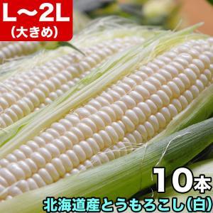 とうもろこし トウモロコシ 超早割 北海道産 ホワイトコーン L〜2L 10本で約4kg 冷蔵
