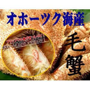 送料無料 毛蟹のブランド オホーツク産 毛蟹 670g×2尾|foodwave